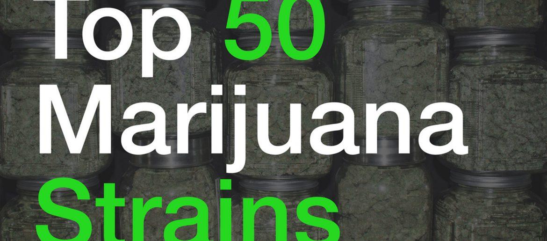 Top 50 Marijuana Strains – herbo