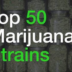Top 50 Marijuana Strains